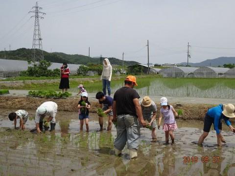 ④お米を作ろうinなかすじ
